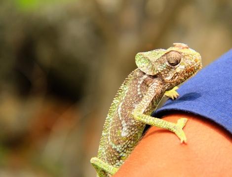 Hello chameleon!
